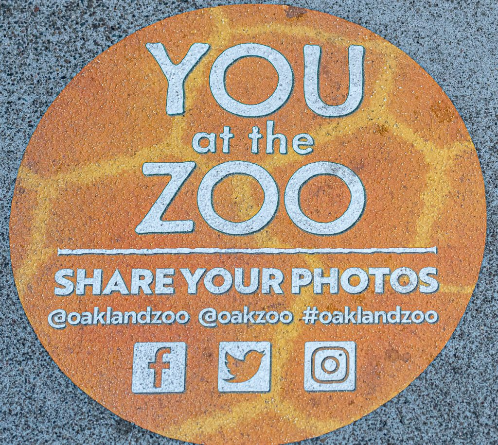 Facebook groups and pages for Zootographers
